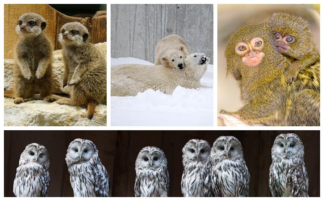 kaks jääkaru, kaks makaaki, kuus öökulli ja kaks surikaati