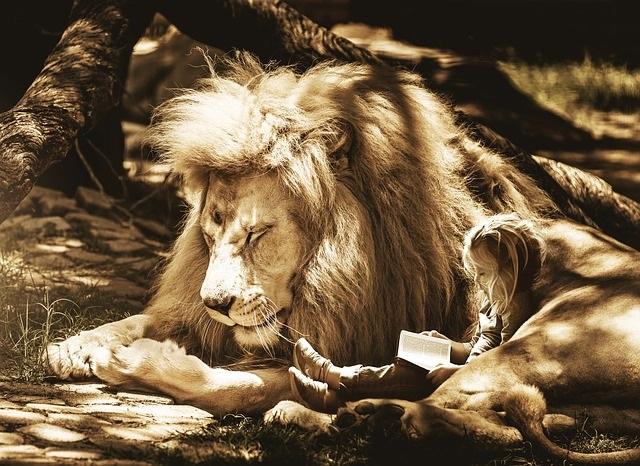 laps loeb raamatut suure ja koheva lakaga lõvi kaisus